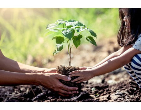 Como plantar uma árvore e ajudar o Meio Ambiente
