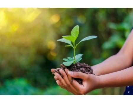Dicas de como preservar o Meio Ambiente